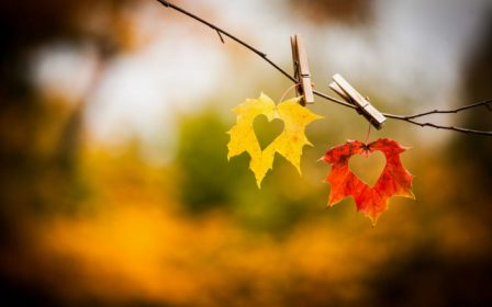 autumn-love-heart-art
